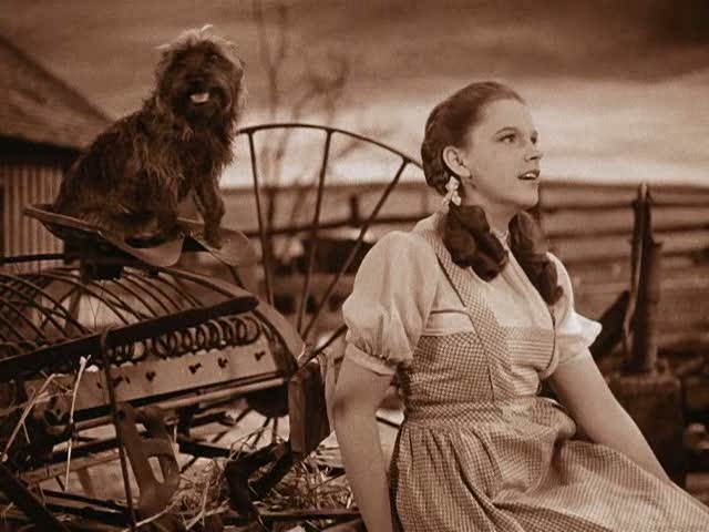 drf the wizard of oz